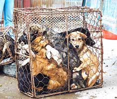 Θα θανάτωναν όλους τους σκύλους σε περιοχή της νότιας Κίνας...